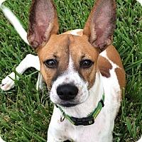 Adopt A Pet :: Maggie May - Seattle, WA