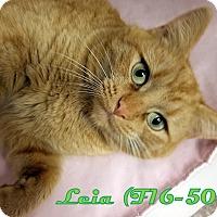 Adopt A Pet :: Leia - Tiffin, OH