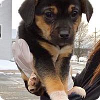 Adopt A Pet :: Simon 2 - Tonawanda, NY