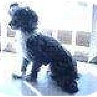 Adopt A Pet :: Suh - Alliance, NE