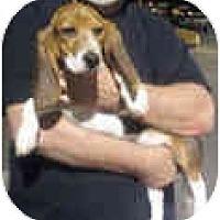 Adopt A Pet :: Roswell - Phoenix, AZ