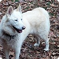 Adopt A Pet :: Lakoda - Brattleboro, VT