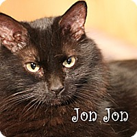 Domestic Longhair Cat for adoption in Wichita Falls, Texas - Jon Jon