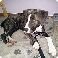 Adopt A Pet :: Sherman ~ Adoption Pending - Youngstown, OH
