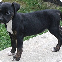 Adopt A Pet :: Maize - North Olmsted, OH