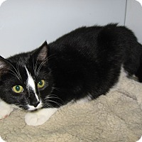 Adopt A Pet :: Duncan -Petsmart Collegeville! - Colmar, PA
