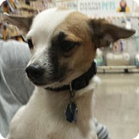 Adopt A Pet :: Alan - Westley, CA