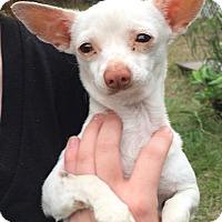 Adopt A Pet :: Tito - geneva, FL