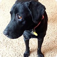 Adopt A Pet :: Popeye~Adoption Pending - Davenport, IA