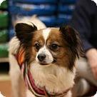 Adopt A Pet :: Maxi Pap