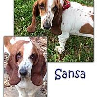 Adopt A Pet :: Sansa - Marietta, GA
