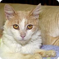 Adopt A Pet :: Foxy - Medina, OH