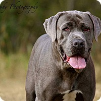 Adopt A Pet :: Gemma - Virginia Beach, VA