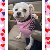 Adopt A Pet :: Adopted!!Fiona - IL - Tulsa, OK