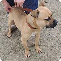 Adopt A Pet :: Woody - Boston, MA
