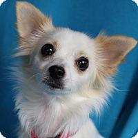 Adopt A Pet :: Elise - Minneapolis, MN