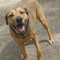 Shepherd (Unknown Type) Mix Dog for adoption in Pt. Richmond, California - SASHA