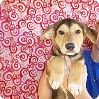 Adopt A Pet :: Pita - Oviedo, FL