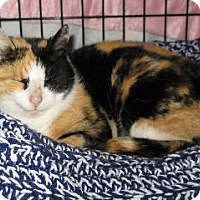 Adopt A Pet :: PATTIE - Hamilton, NJ