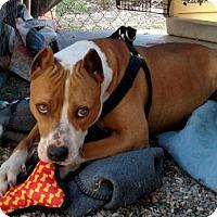 Adopt A Pet :: JOSIE BARKLEY - Waldron, AR