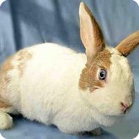 Adopt A Pet :: ROOK - Pittsburgh, PA