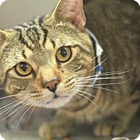 Adopt A Pet :: King (foster care) - Philadelphia, PA