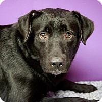 Adopt A Pet :: Xavier - Westfield, NY