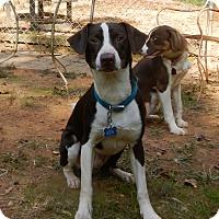 Adopt A Pet :: Rafiki - North Wilkesboro, NC