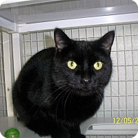 Adopt A Pet :: Mr. Midnight - Gunnison, CO