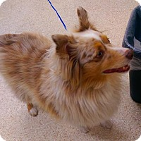 Adopt A Pet :: Rawdy - Carson City, NV