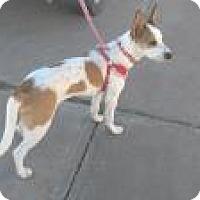 Adopt A Pet :: JENNY - Pena Blanca, NM