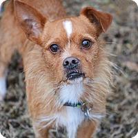 Adopt A Pet :: Cabe - Southington, CT