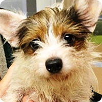 Adopt A Pet :: Rory - Oswego, IL