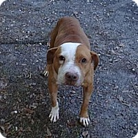 Adopt A Pet :: SPENCER - Okatie, SC