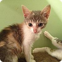 Adopt A Pet :: Autumn - East Hanover, NJ