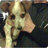 Adopt A Pet :: Joey - Alliance, NE