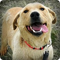 Adopt A Pet :: Celeste - Cheyenne, WY