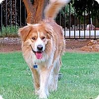 Adopt A Pet :: BIG FOOT - Phoenix, AZ
