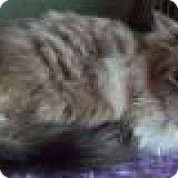Adopt A Pet :: Yeats - Ennis, TX