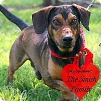 Adopt A Pet :: Gus - San Leon, TX