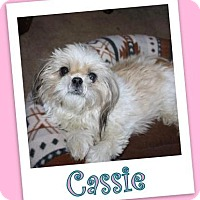 Adopt A Pet :: Cassie Clermont - Pataskala, OH