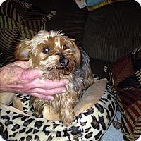 Adopt A Pet :: Cindy - Butler, OH