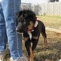 Adopt A Pet :: Van - Bedford, TX