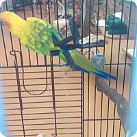 Adopt A Pet :: Atukus - Villa Park, IL
