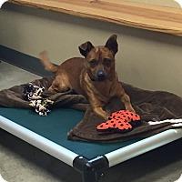 Adopt A Pet :: Archie - Nashville, TN