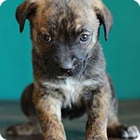 Adopt A Pet :: Nicole - Waldorf, MD