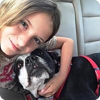 Adopt A Pet :: ALBERT-Emotional Support Animal - DeLand, FL
