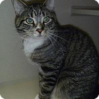 Adopt A Pet :: Rocko - Hamburg, NY