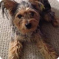 Adopt A Pet :: Duke- Adoption Pending - Fairfield, OH