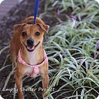 Adopt A Pet :: Winnie - Manassas, VA